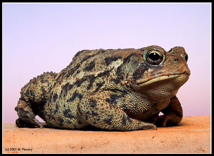 toad6759bs.jpg