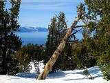 Lake Tahoe Scenes