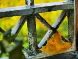 Imprisoned Leaf