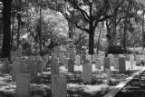 2371 spanish moss and tombstones bw.jpg