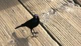 Birds Eye View.jpg (NFS)
