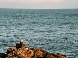 Cove Bay... Aberdeen...