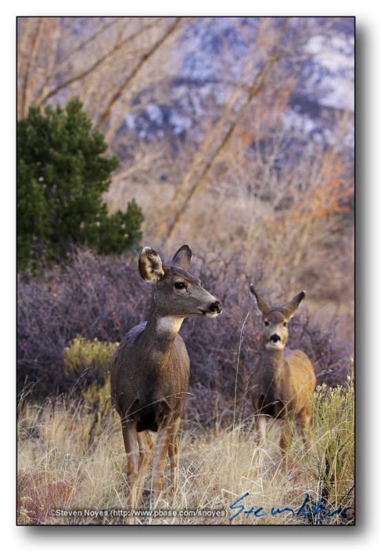 Deer at Great Sand Dunes : Week 7