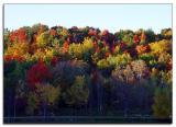 Crayola treetops