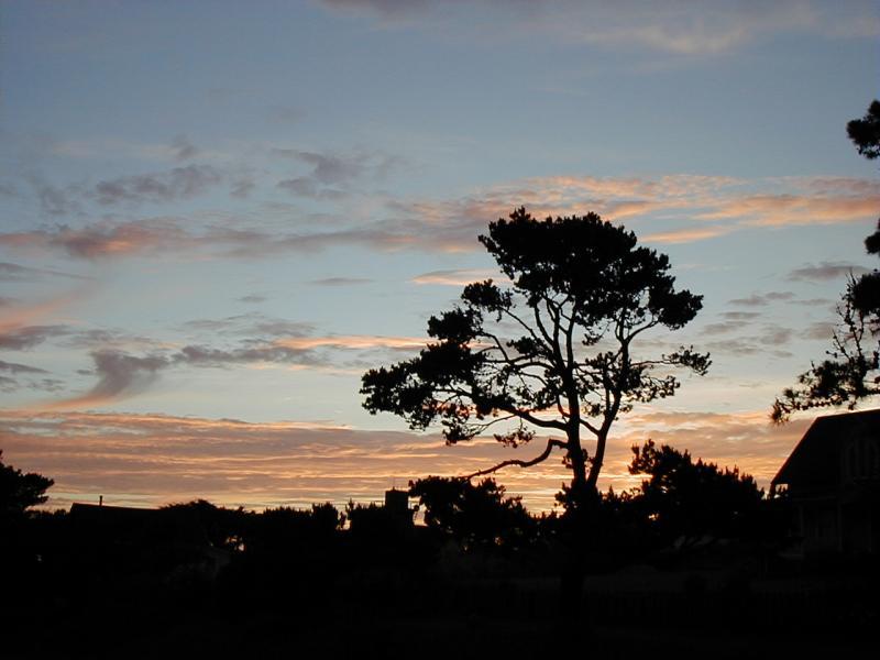 Sunset Tree in Mendocino Erichocinc
