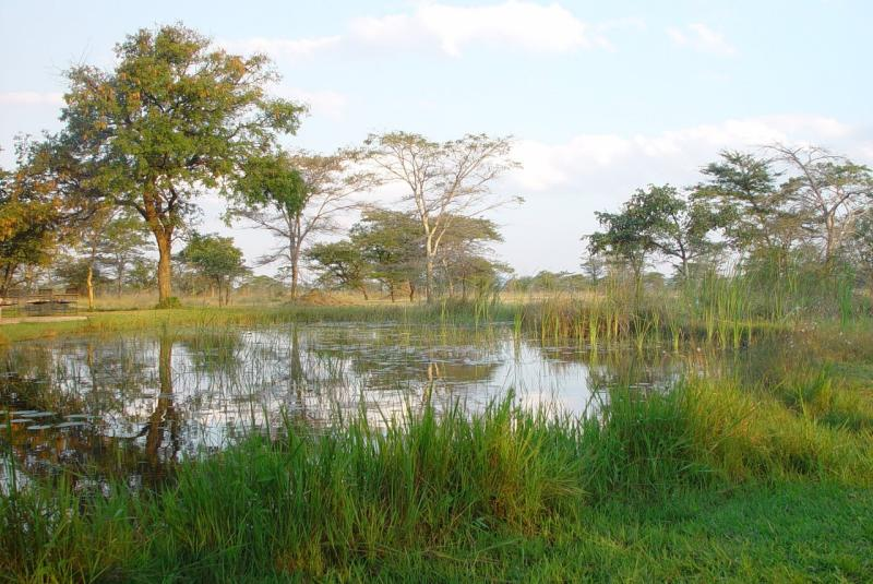 Wetland area Kafue Flats, Zambia by Marcello