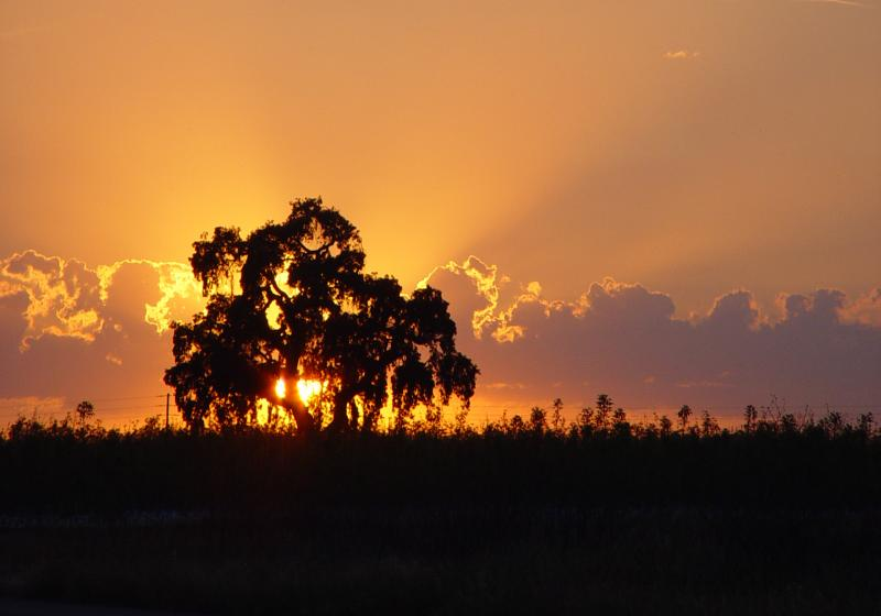 <b>Sunset Tree</b><br><font size=2> by Nee</font>