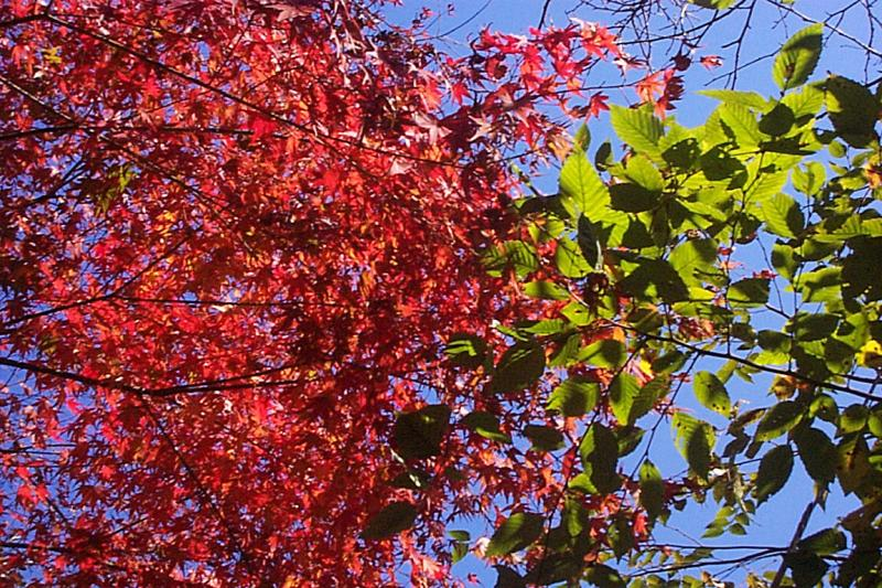 <b>Sunny Leaves</b><br><font size=-1>ToddH</font>