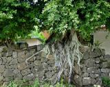 Tree Wall    by Helen Betts
