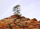 Zion Lone Tree by Antoine