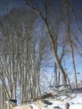 Trees Reflectedby pinback