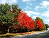 Fall colors by Yehuda