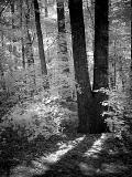 ForestFaye White