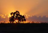 Sunset Tree by Nee
