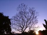 Naked Tree By Canaroni