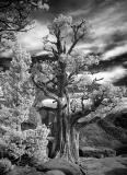 3rd - foxtail pineby jason