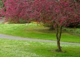 Green and PinkDavid Pichevin