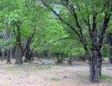 Trees in Yorsemity by Antoine