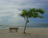 Beachcombing Tree    by Helen Betts