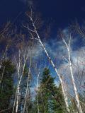 Trees and blue Sky  by Kafrifelle (Yves P)