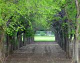 Tunnel of Shade, Find the Birds by Jasper