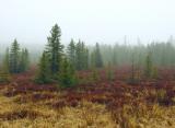 Foggy Bog by kimr55760