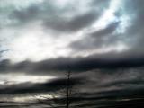Treetop Under Threatening Skies cUrVe