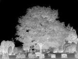 Ghost Tree Damageinc333