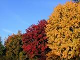 Foliage Ed Corneau