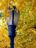 Autumn's Lightby Klyphton