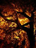 Arbor Nightby Klyphton