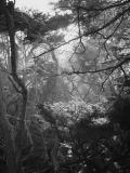 Enchanted forestby Eugeni Vaisberg