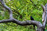 The Tree as a Home David Pichevin