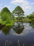 A still day at Wiggins Millpond   by Thabear