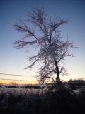 Ice Tree by Teri James