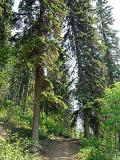 Trail by canadian_ann