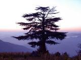 Soli-Tree by Vikas