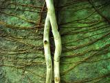Anatomy by Cara Davis