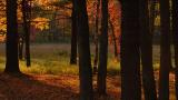 Tree Path Ed Corneau