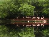 trees and flamingos by florg