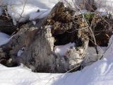 Snowy Stump by Mark Wood