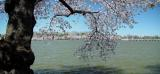 Springtime in Washington.  Fremiet