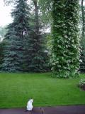 Veiled in Splendor     by Bev Brink