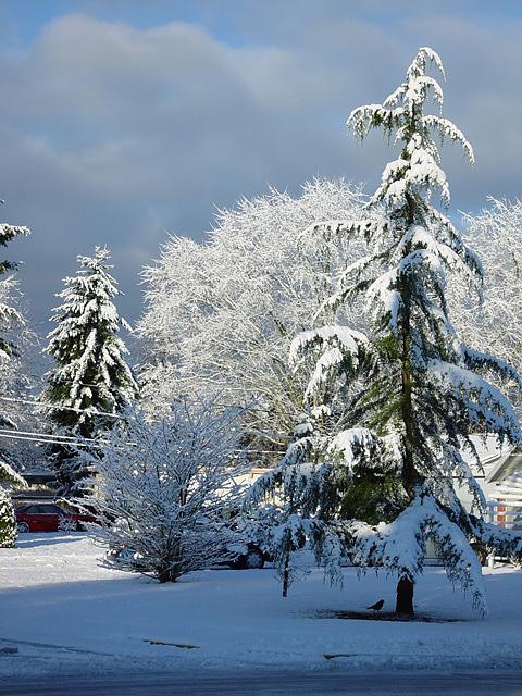 <b>Snowday</b><br><font size=2>by  elamont</font>