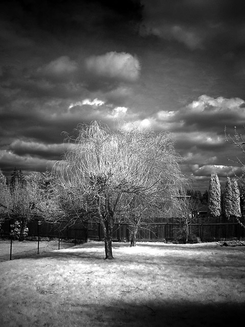 <b>Infrared Yard</b><br><font size=2>by elamont</font>