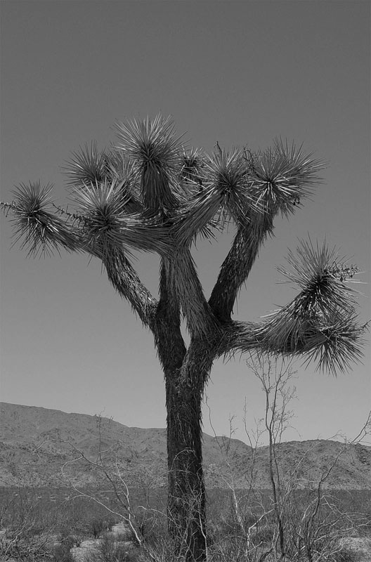 <b>Joshua Tree National Park</b><br><font size=2>by Joshua Lowe<br> (no relation to the tree)