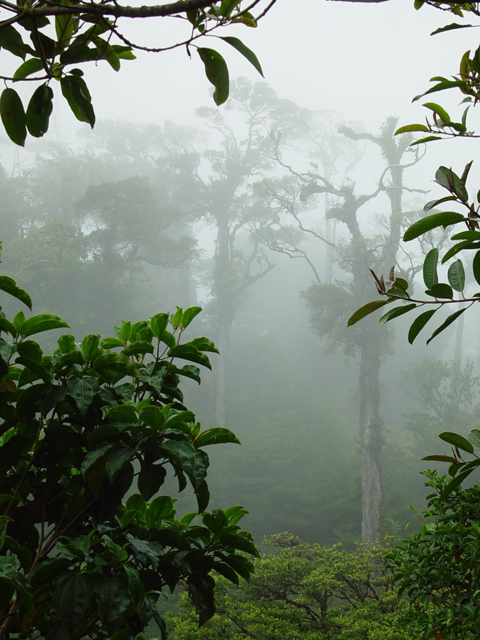 <b>4th - Cloud Forest</b><br><font size=-1>by Eugeni Vaisberg</f>