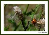 Insects I