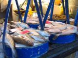fish market in Ostend