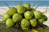 coco verde3